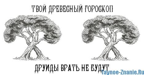 Дерево и знаки зодиака