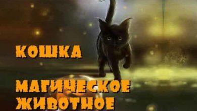 Как кошки защищают дом от негатива?