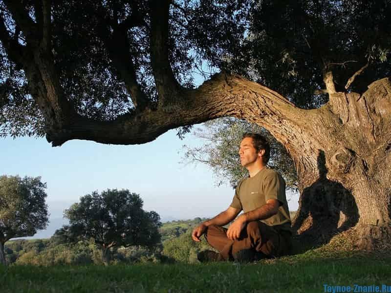 Лечение деревьями, как использовать
